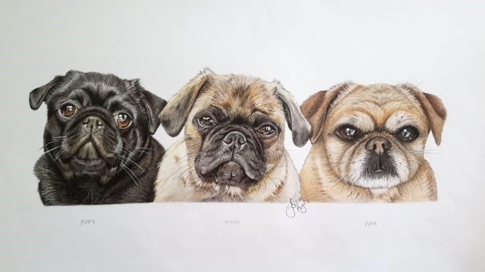 Poppy, Moog and Pippa. The Three Little Pugs pencil portrait 2017