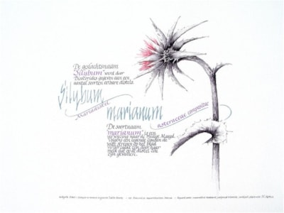Silybum marianum