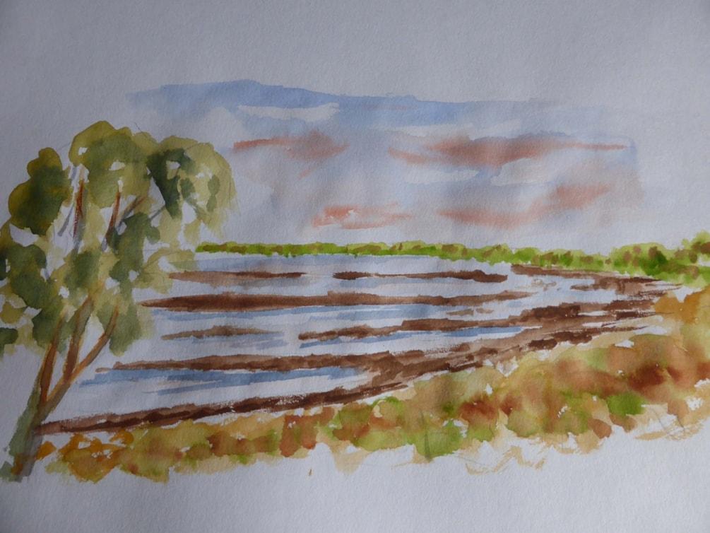 Humberhead Peatlands NNR watercolour sketch