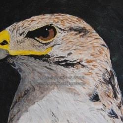 Ferruginous Eagle