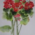 Garden Flowers-Geranium