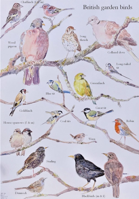 The garden birds