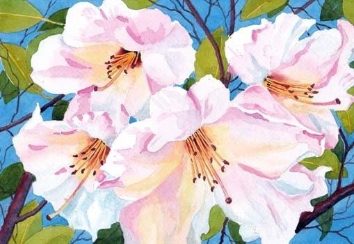 Sunshine and Cherry Blossom.