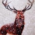 Winter in Scotland 1983