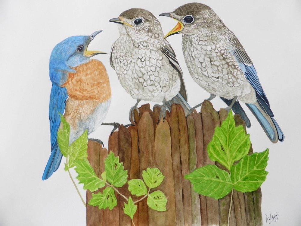 Three Eastern Bluebirds