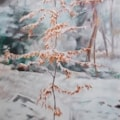 Young Beech Tree in the Snow