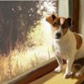 Pet Window 1