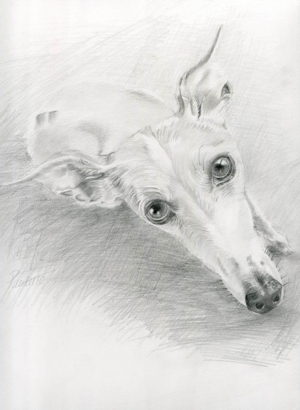That Whippet Look!