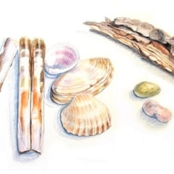 Shells,Stones and Bark