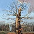 April Oak tree, Sherwood Forest.