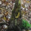 Stumpy Shard