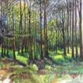 Woods near Barney in Norfolk