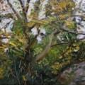 Walnut Tree in Back Garden.