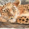 Leopard languishing