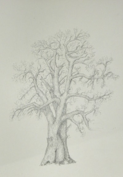 FROM LITTLE ACORNS GROW     done with HB pencil   A3    H/P