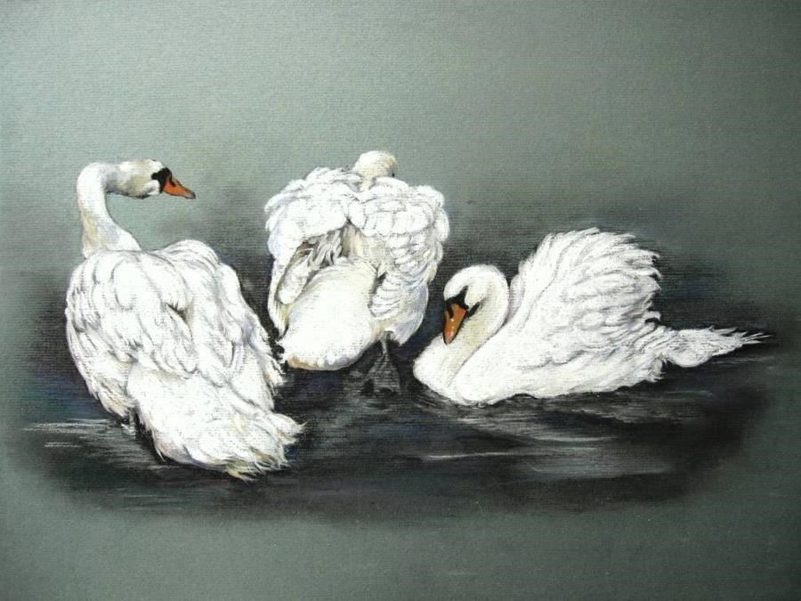 Suffolk Swans