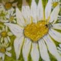"""""""Bees Zum Zum such a Merry Hum"""""""