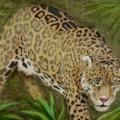 Sovereign,  Jaguar at Dartmoor Zoo.  RIP