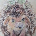 Hammy Hedgehog