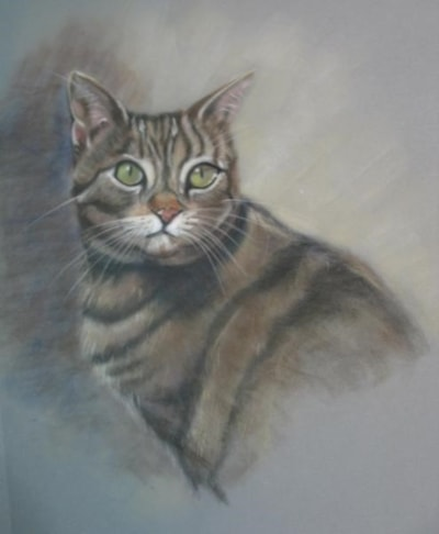 Tabby Cat - Workshop