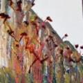 PoplarsPollarded