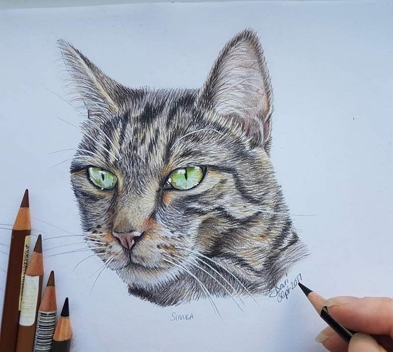 Simba the Cat - Pencil portrait 2017