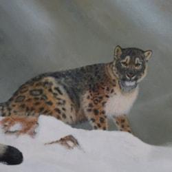 Young Snow Loepard