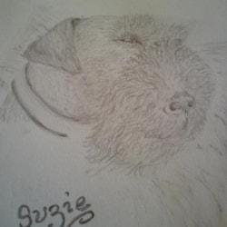 Suzie Welsh Terrier