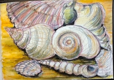SEASIDE CHALLENGE    ...Shell sketch.