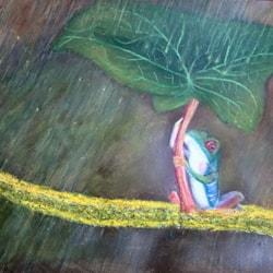 Tree frogs 3