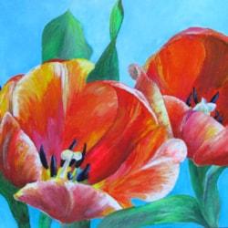 Tulipa Orange Wonder