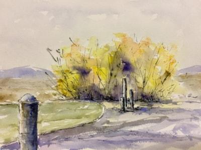 Autumn Willows