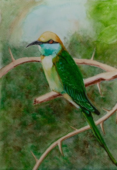 Sri Lankan Bee-eater.