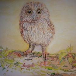 Endangered Wildlife: Tawny Owl chick