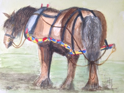 Buddy the boat horse