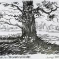 Thoresby Estate oak tree.