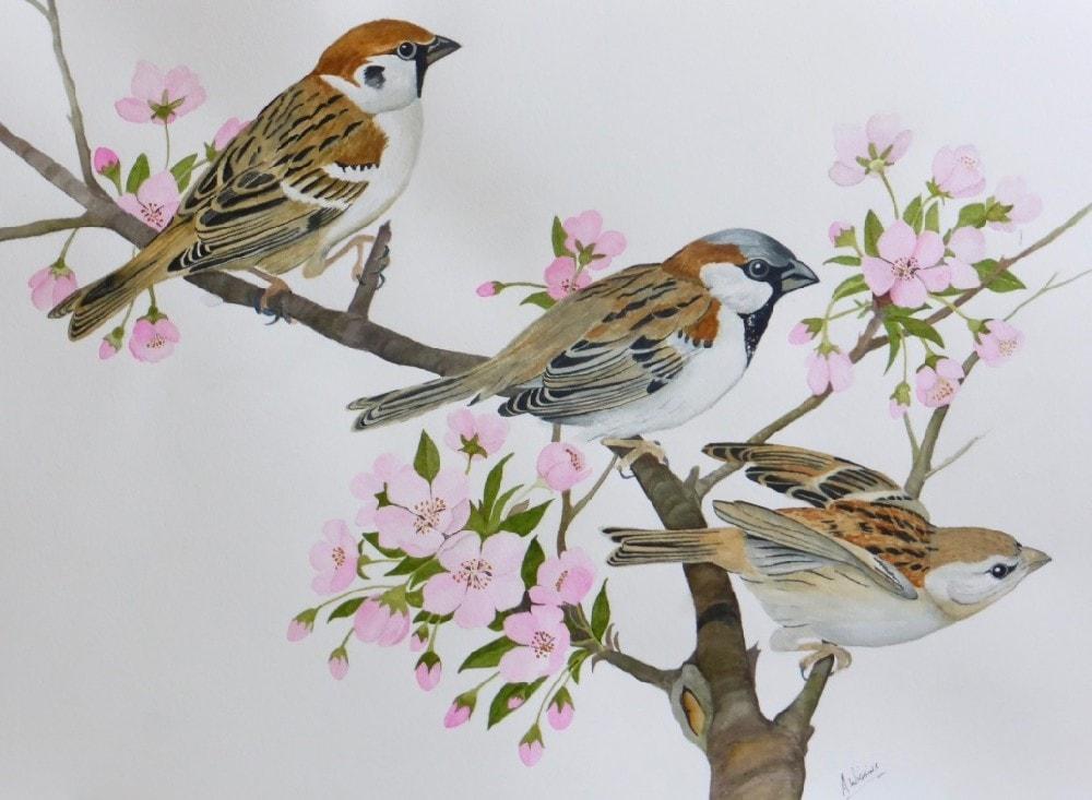 Trio of Sparrows