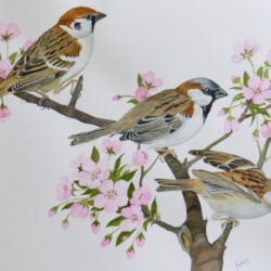 Trio of Sparrows