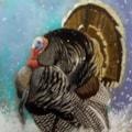 The Turkey who Escaped