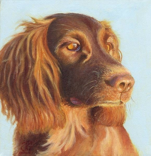 Echo. The Graduate Hearing Dog.