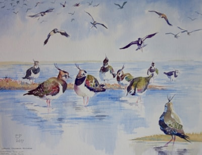 """Lapwings -watercolour on Not paper, 16x12"""""""