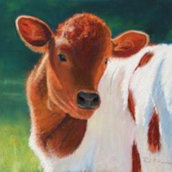 Curious Calf