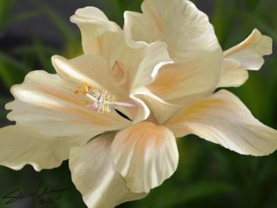Creamy Peachy Hibiscus