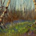 Bluebells - Hucking Wood, Kent
