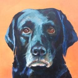 Oscar, 11, Best Dog in the World