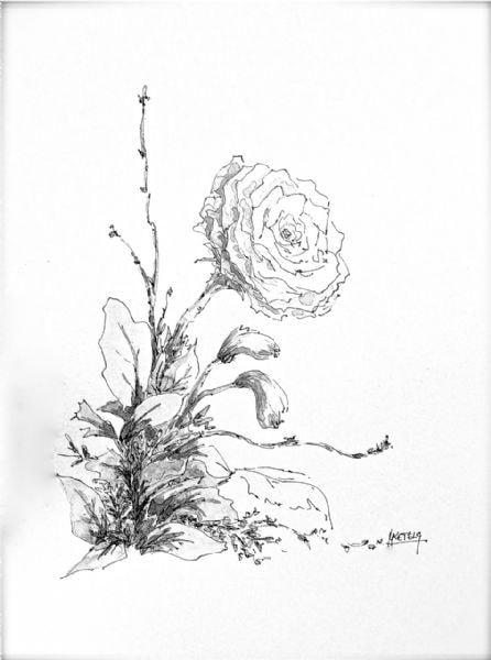 Flower-arrangement sketch