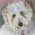 Lilly the Labradoodle