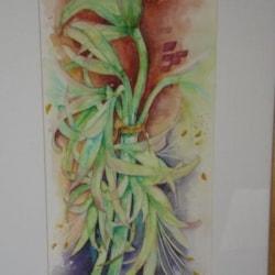 Green Amaryllis