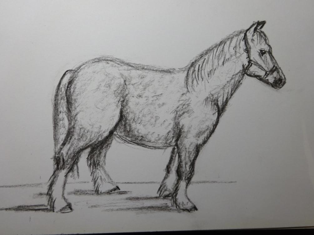RA live streamed life class - Romeo Welsh mountain pony