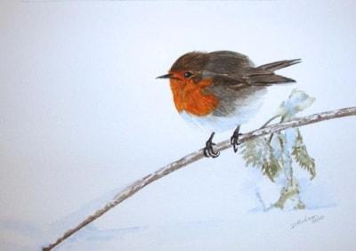 Robin on Nettle